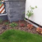 Výsadba u plotu (2) - po půl roce